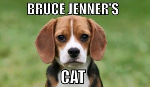 Bruce Jenners Cat Is It Funny Or Offensive