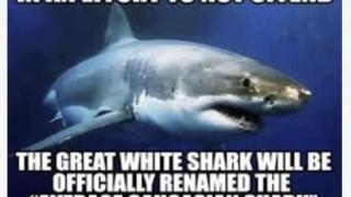 average caucasian shark