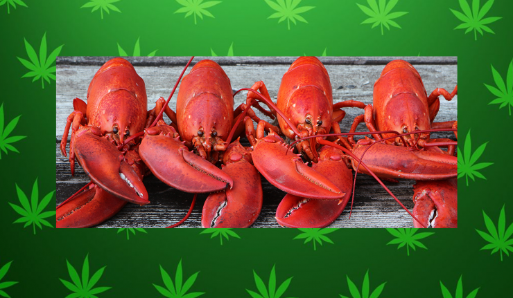 Maine Restaurant Gets Lobsters High To Calm Them Before Being Cooked