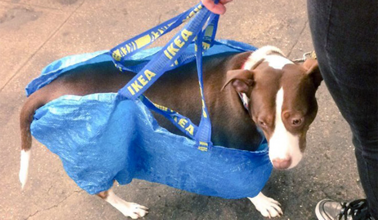 NYC Dog Owners Creatively Get Around 'Dog in Bag' Subway Rule